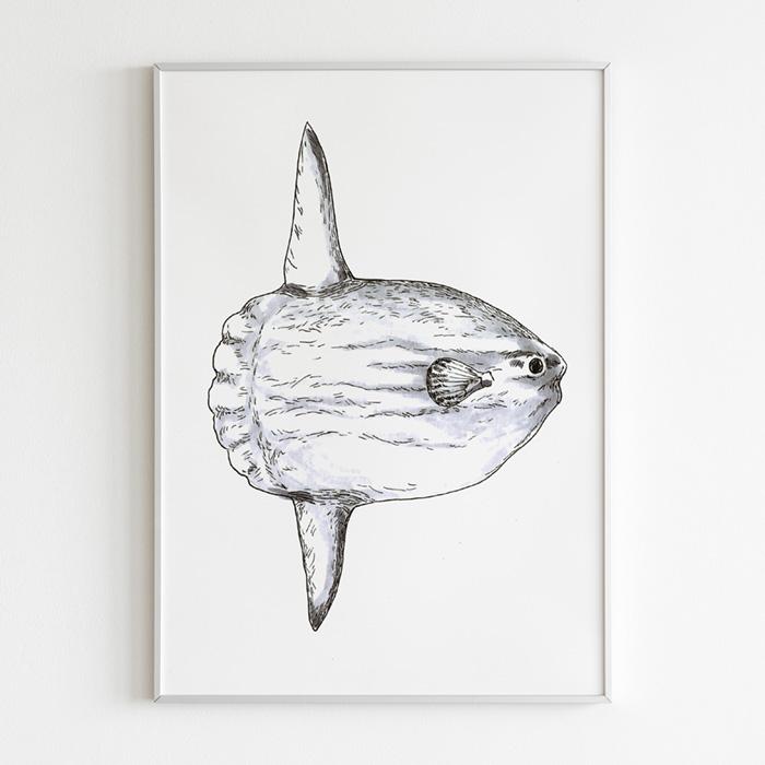 ilustración científica, Ilustración naturalista de un pez luna, ilustracion a la tinta y rotuladores