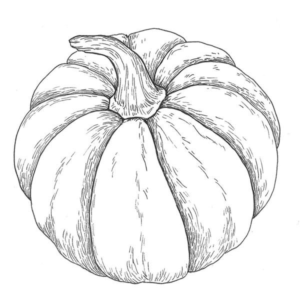 ilustración científica, ilustración tinta, ilustración calabaza, ilustración para LaBullipedia, ilustración de producto