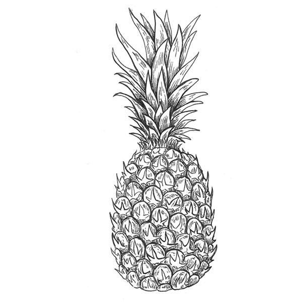 ilustración científica, ilustración tinta, ilustración piña, ilustración para LaBullipedia, ilustración de producto