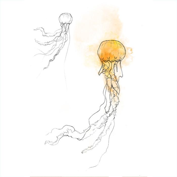 Ilustración naturalista de medusas, técnica digital y grafito