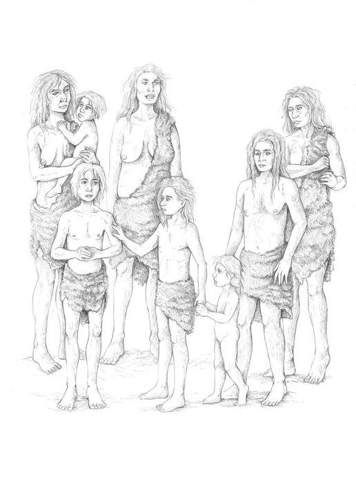 ilustración científica, ilustración hecha con grafito, ilustración familia primitiva. Ilustración para LaBullipedia
