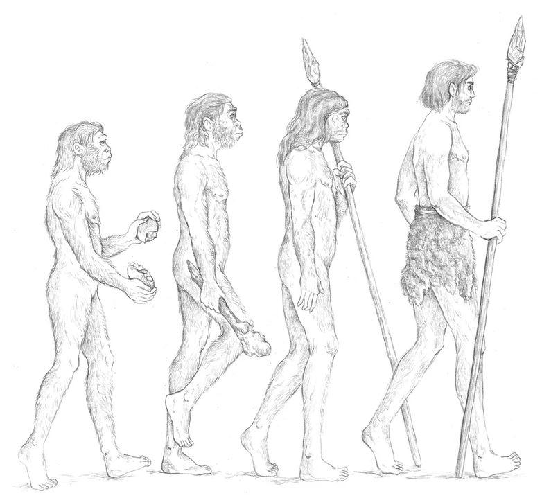 ilustración científica, ilustración grafito, ilustración evolución humana. Ilustración para LaBullipedia