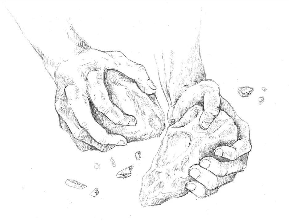 ilustración científica, ilustración hecha con grafito, ilustración manos. Ilustración para LaBullipedia