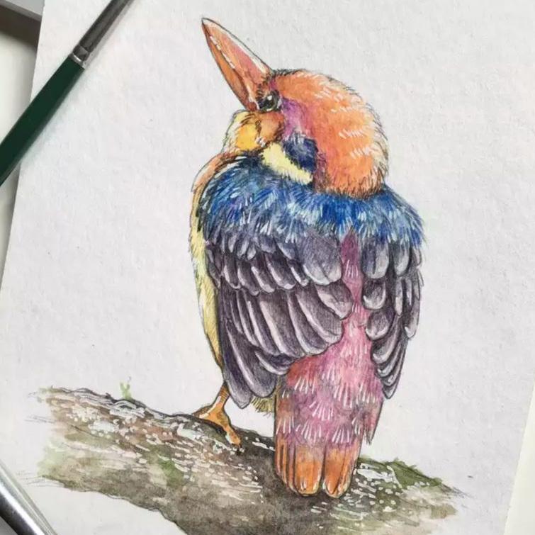 ilustración científica, ilustración animales, hecho a la acuarela y lápices de colores