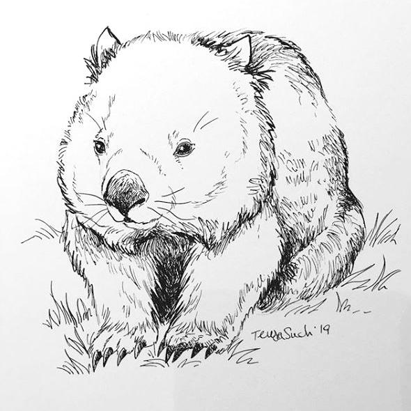 Wombat. Tinta.