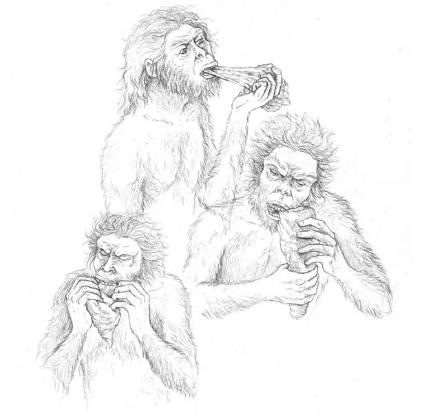 ilustración científica Teresa Such