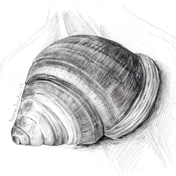 il·lustració caragol