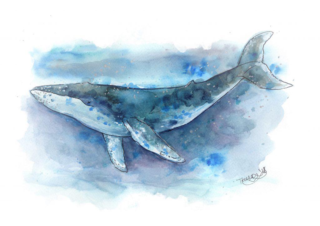 ilustración ballena jorobada de Teresa Such