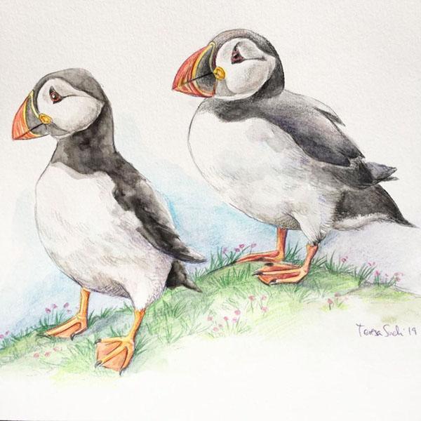 ilustración científica y naturalista Teresa Such