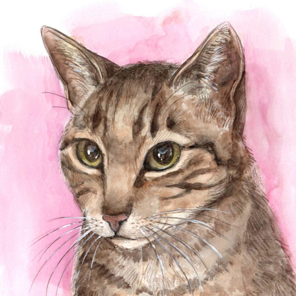 retratos personalizados mascotas