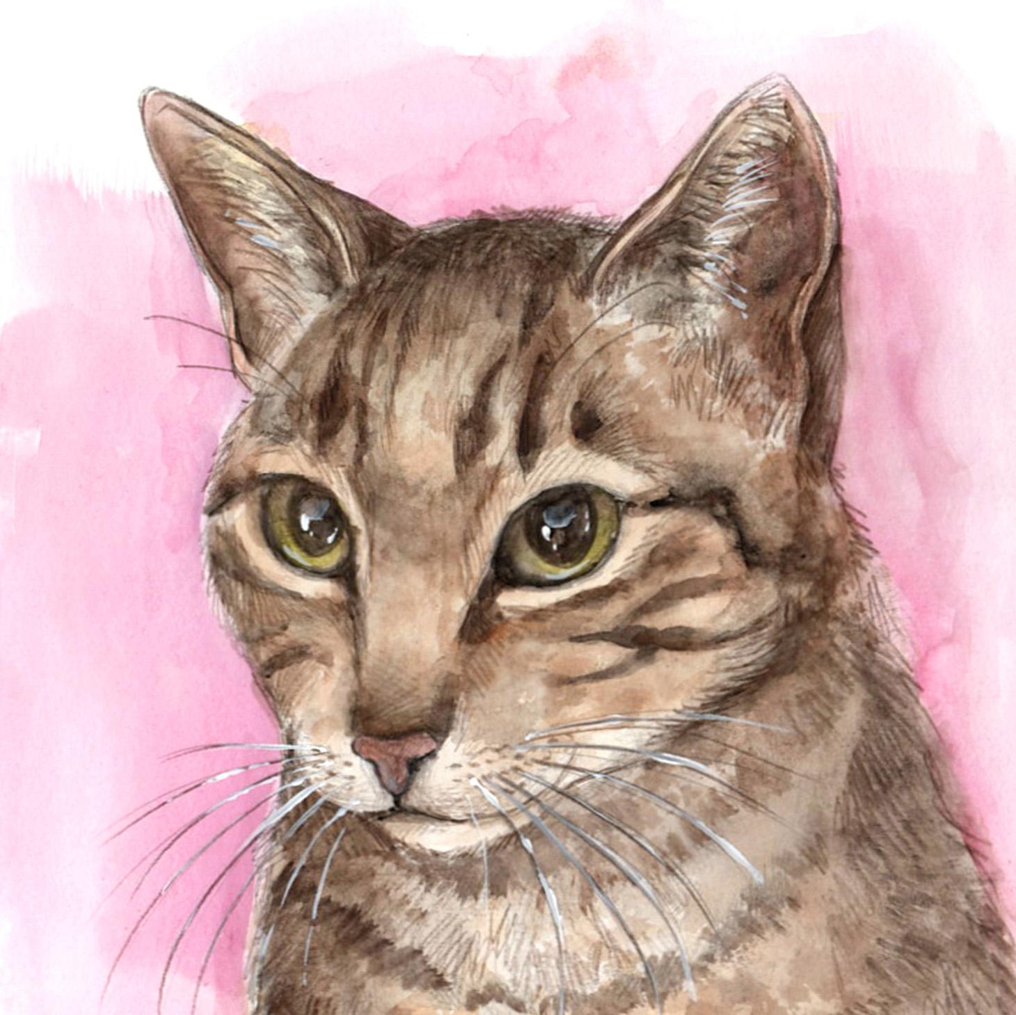Il·lustracions personalitzades i retrats