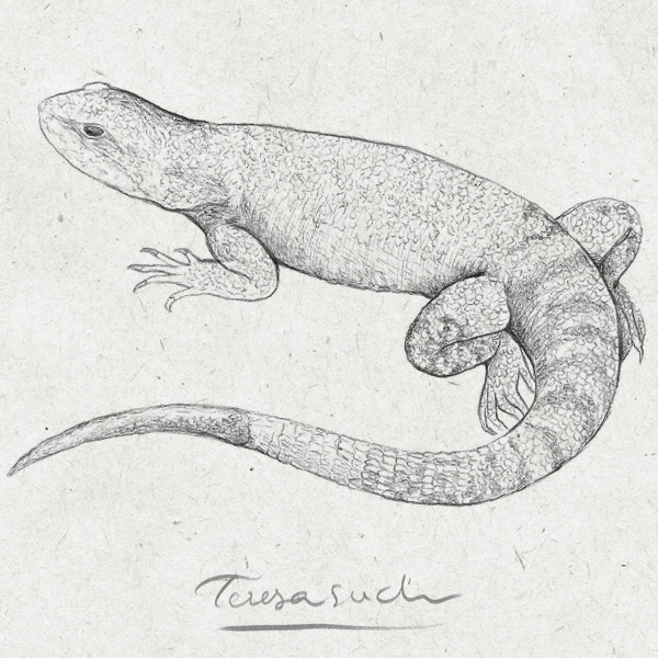 il·lustració naturalista