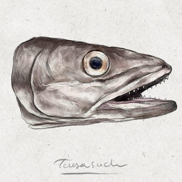 il·lustració científica peix