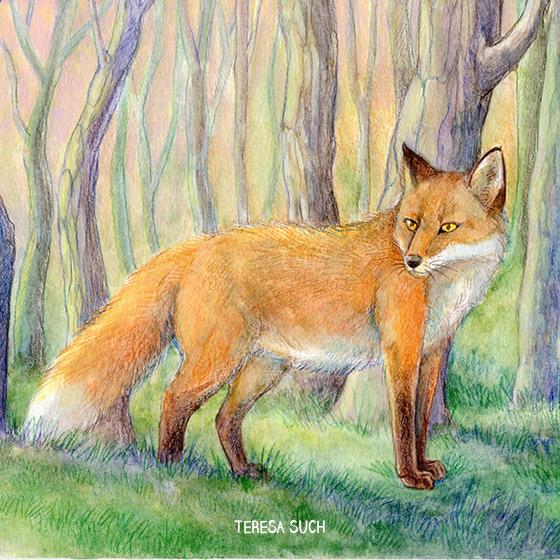 ilustraciones personalizadas de animales