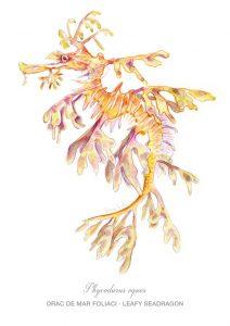 dragón marino