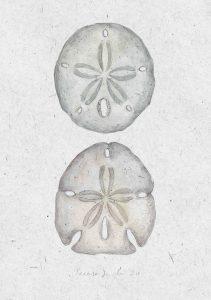 il·lustració eriçons de mar