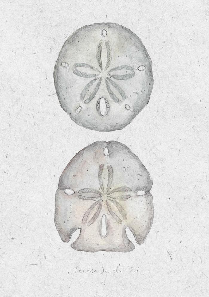 ilustración erizos de mar