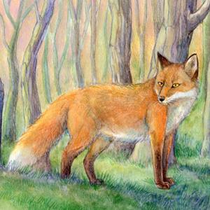 il·lustració de guineu
