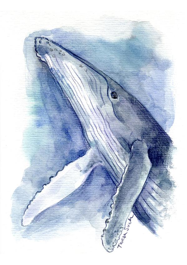 Ilustración ballena