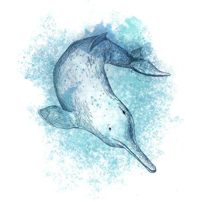 delfín chino
